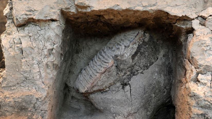 FOTOS: Terremotos en California dejan al descubierto un fósil de un gran animal de hace 15 millones de años