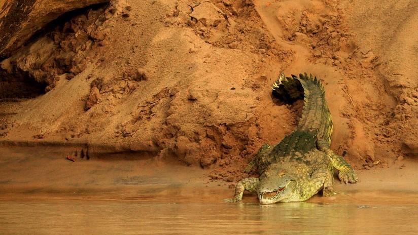 Una niña de 11 años salta sobre un cocodrilo y le arranca los ojos para salvar a su amiga del ataque del reptil