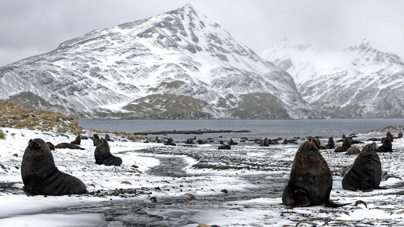 Estudio: el aumento del hielo marino antártico pudo haber contribuido a la era del hielo
