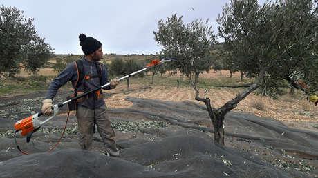 Un trabajador de la industria olivarera en Oliete (Teruel, España), el 17 de Diciembre de 2018.