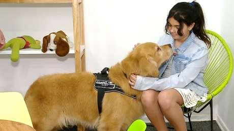 VIDEO: Titán, el perro de terapia que ayuda a declarar a los menores que  han sufrido abusos en Buenos Aires - RT
