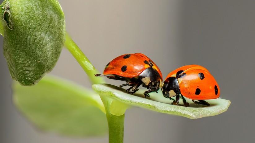"""Advierten que la desaparición de insectos alcanzó un nivel """"aterrador"""""""