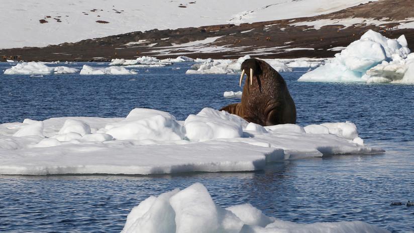 Colegiales rusos descubren una nueva isla en el Ártico