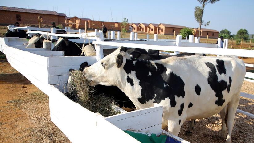 """Político indio asegura que la leche de vaca """"tiene oro"""" y sugiere a la gente que coma perro"""