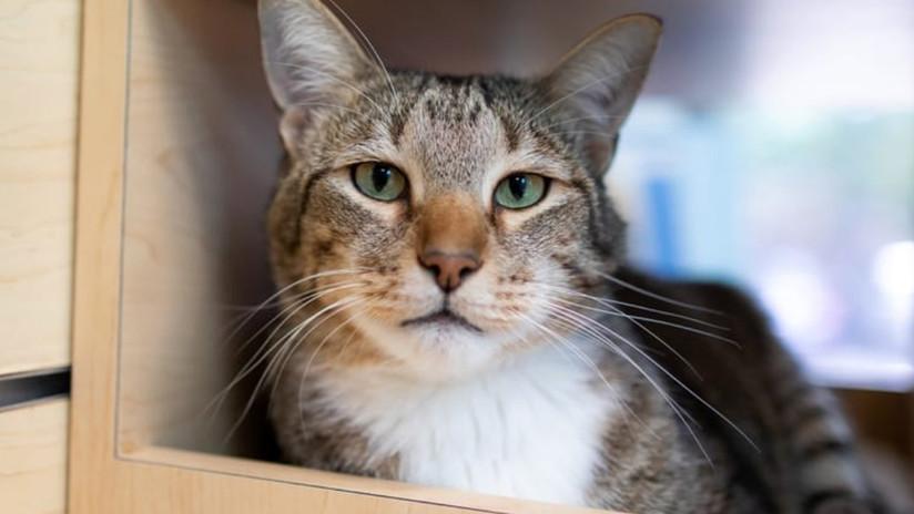 VIDEO: 'Castigan' al gato de un refugio por su 'manía' de dejar salir a los demás felinos