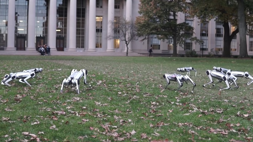 """""""Prácticamente indestructible"""": Muestran a 'robots guepardo' mientras bailan y juegan al fútbol"""