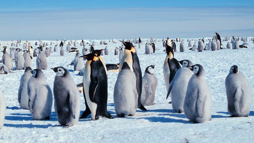 """Los pingüinos emperador """"marchan hacia su extinción"""" a causa del calentamiento global"""
