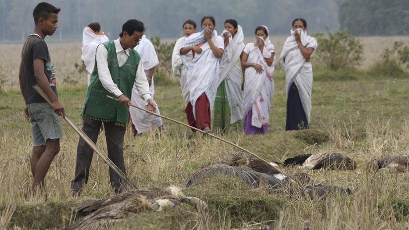 Encuentran centenares de aves muertas alrededor de un lago en la India