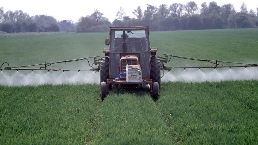 """Advierten que el """"apocalipsis de los insectos"""" afectaría a todo el planeta"""