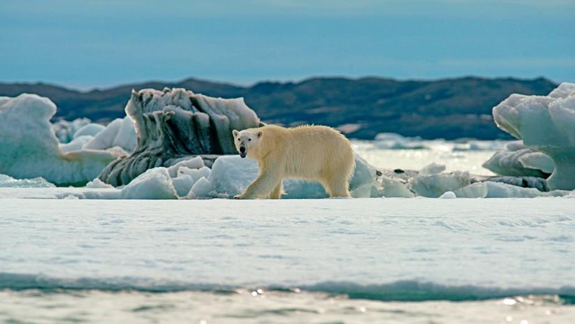 VIDEO: Científicos muestran los dramáticos cambios en el último refugio de hielo del Ártico