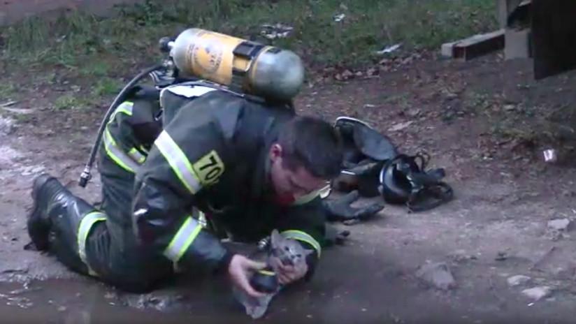VIDEO: Un bombero ruso reanima a un gato intoxicado en un incendio