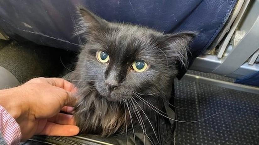 Un gato desaparecido se reencuentra con su dueño después de 5 años y 2.000 kilómetros de recorrido