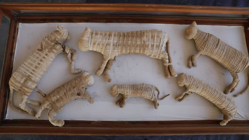 FOTOS: Hallan momias de leones y decenas de figuras de cocodrilos y otros animales en una antigua necrópolis de Egipto
