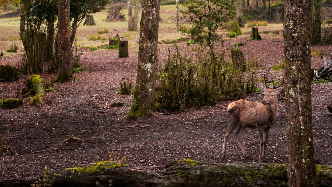 VIDEO: Una pitón salta del agua a velocidad de relámpago y ataca a un ciervo