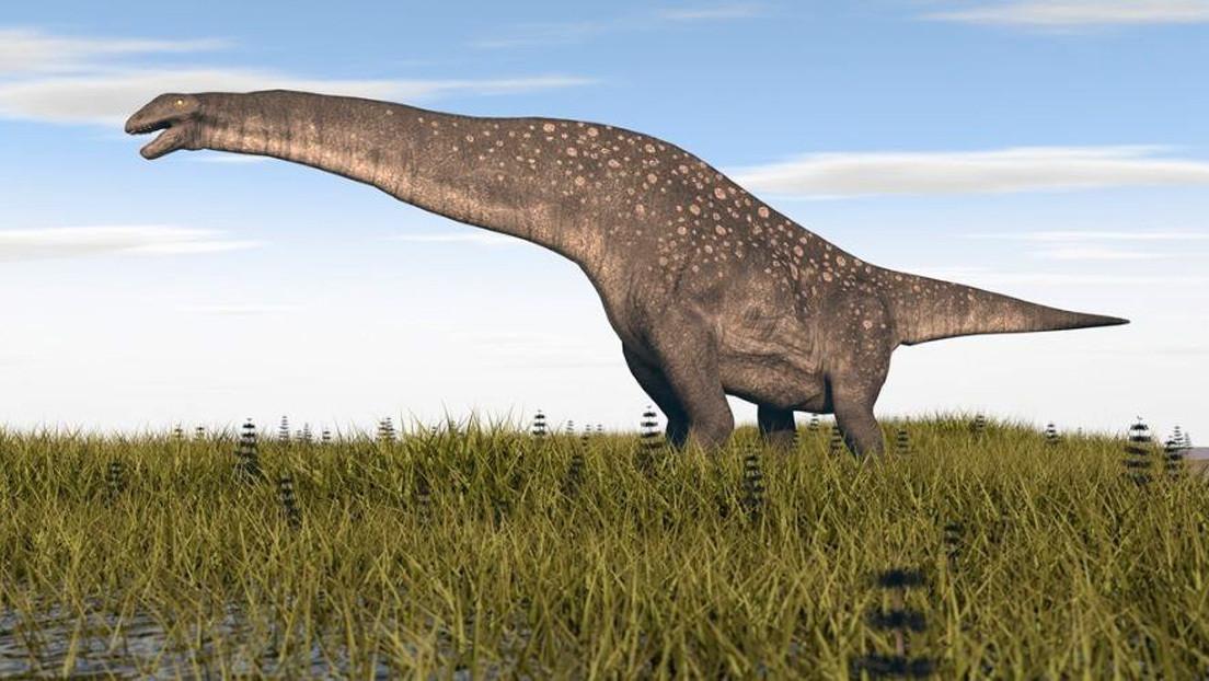 Hallan en Argentina restos de un titanosaurio de 85 millones de años