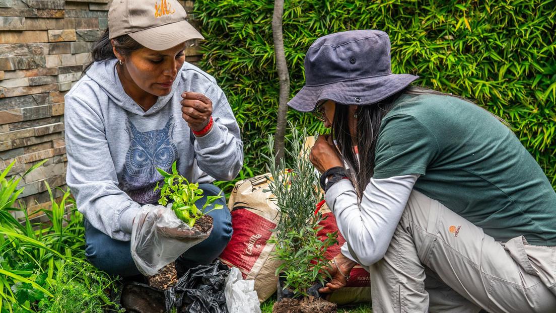 La escuela itinerante de agroecología que levanta huertos por doquier y satisface el comer sano