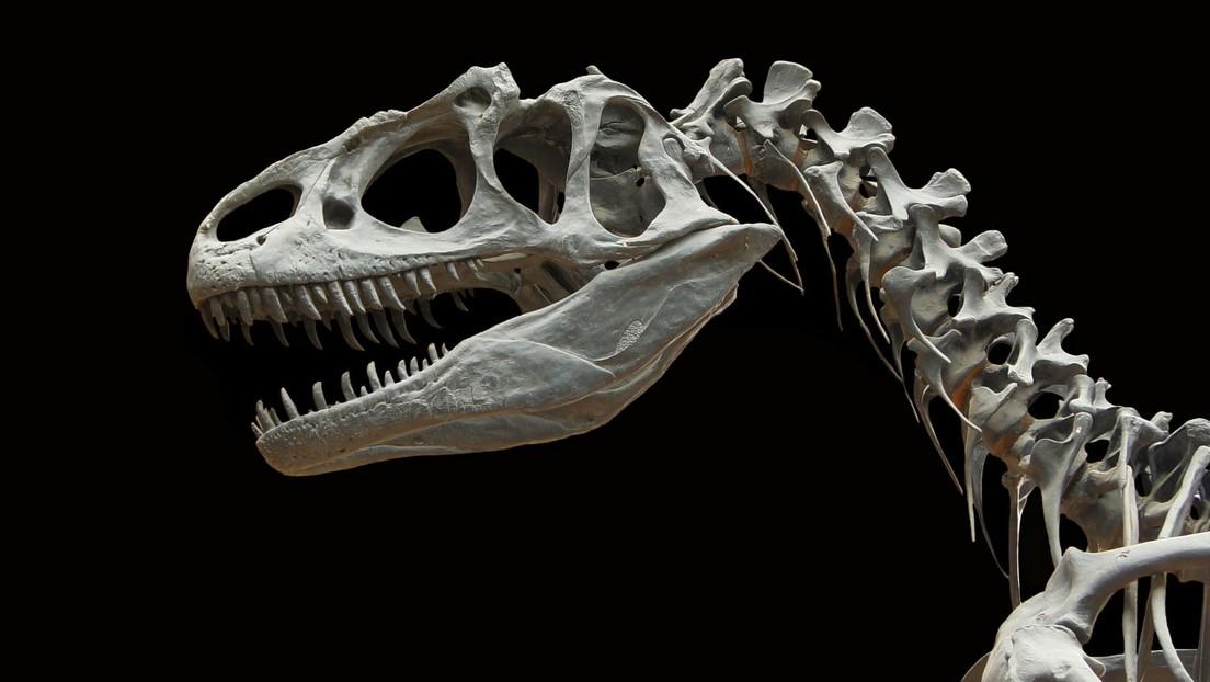 Descubren que algunos dinosaurios renovaban con frecuencia sus dientes desgastados porque roían huesos