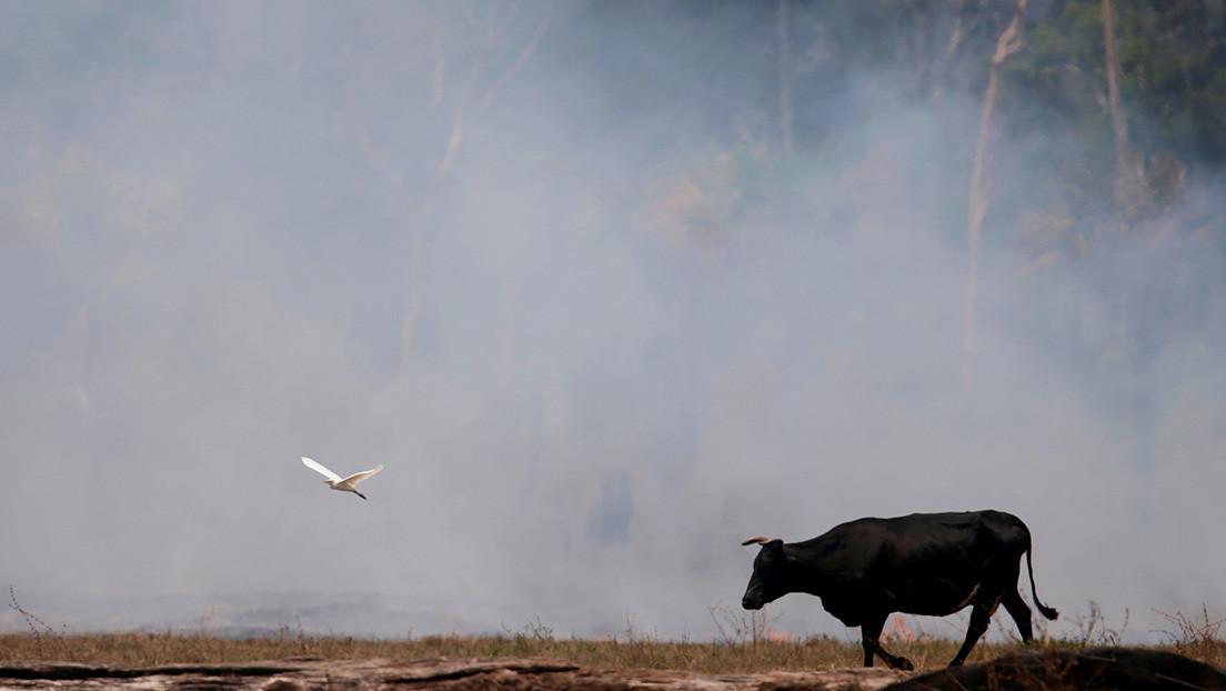 Los incendios de la Amazonia aceleran el derretimiento de los glaciares de los Andes