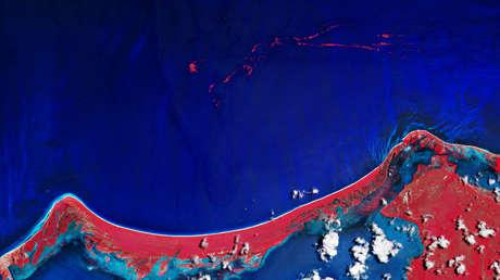 Captan desde el espacio gigantescas manchas de sargazo cerca de la costa de México