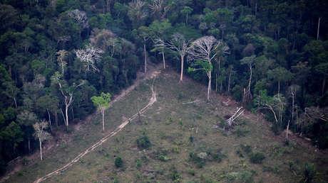 """Alertan del saqueo de tierras indígenas en la Amazonía para la ganadería ilegal: """"Es una amenaza para todo el ecosistema del planeta"""""""