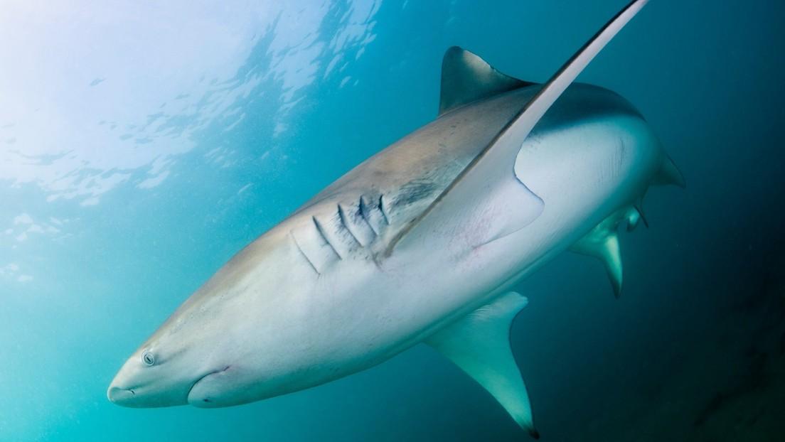 Hallan un lugar al que los tiburones regresan cada año, pero nadie entiende por qué