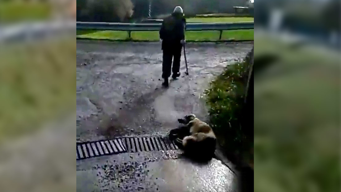 Un cazador en España dispara, apalea y arrastra moribunda a su perra y ahora se enfrenta a 18 meses en prisión