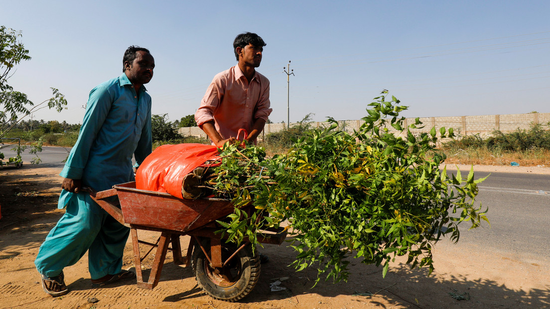 Un jubilado quiere plantar 50.000 árboles para dar sombra a los peregrinos en Irak