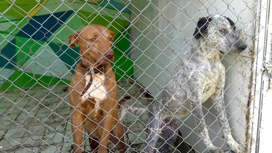 Un lugar único en el mundo que acoge a los perros en situación de riesgo en el Metro