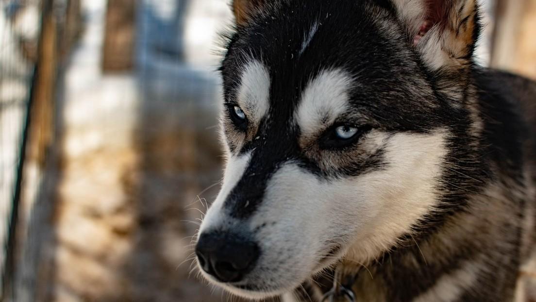 Perro enciende accidentalmente un microondas y por poco quema la casa de su dueña