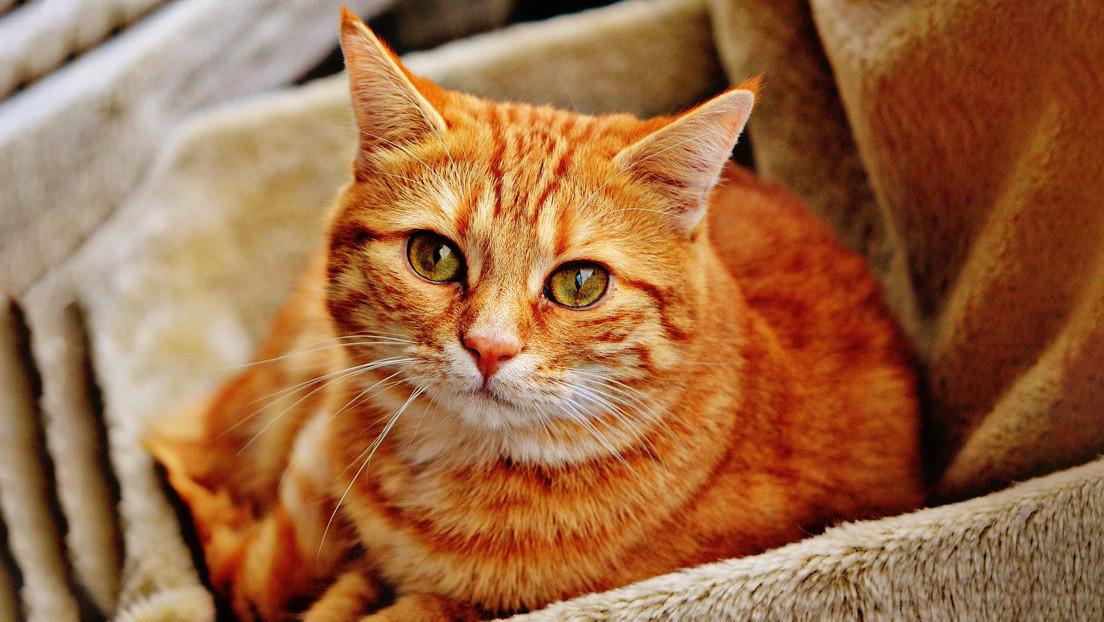 VIDEO: Un gato 'habla' con un perfecto acento sureño de EE.UU. y los usuarios no pueden parar de verlo