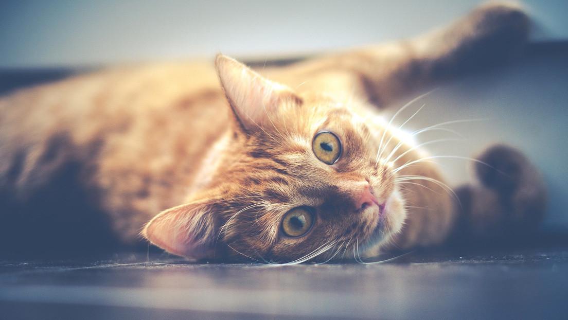VIDEO: Rescata del interior de una pared compartida a un gato abandonado por sus antiguos vecinos