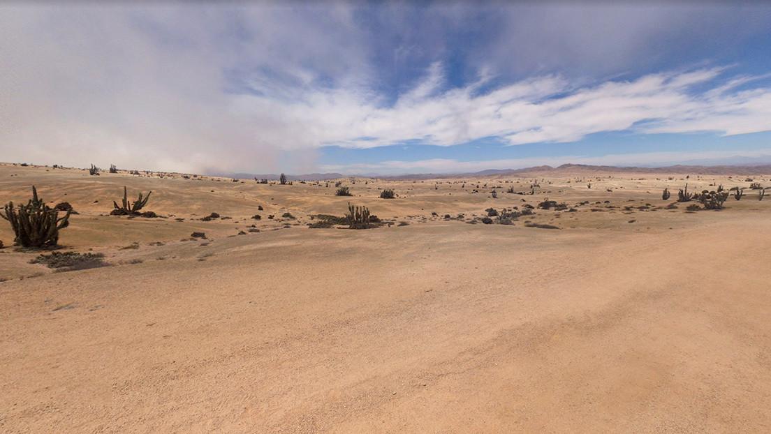 Hallan en el desierto de Atacama una comunidad biológica única que sobrevive gracias a la niebla