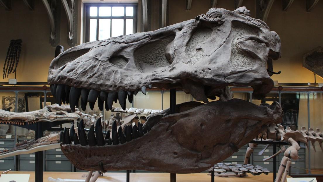 Un nuevo dinosaurio hallado en Argentina revela claves de la evolución de los terópodos