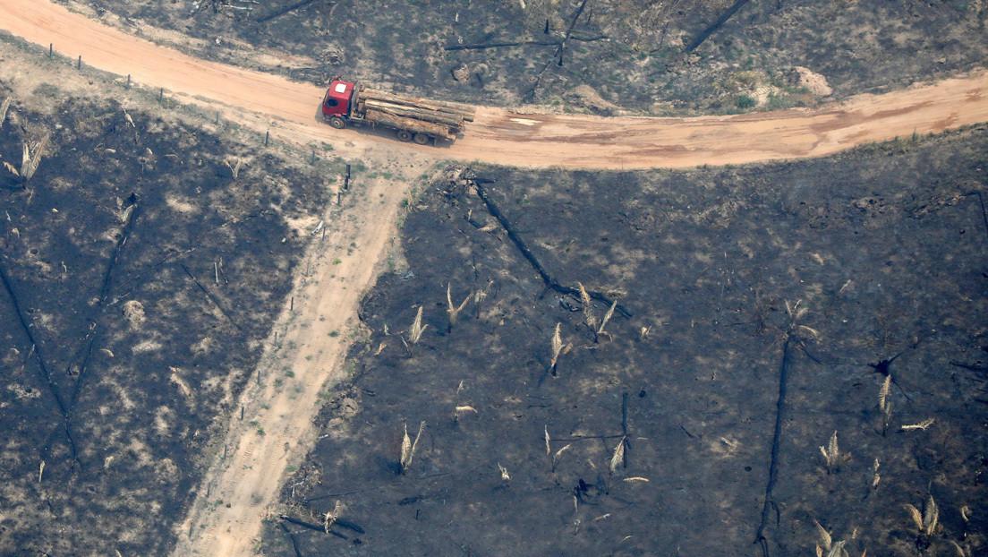 Deforestación en la Amazonía brasileña aumentó 103,7 % en noviembre