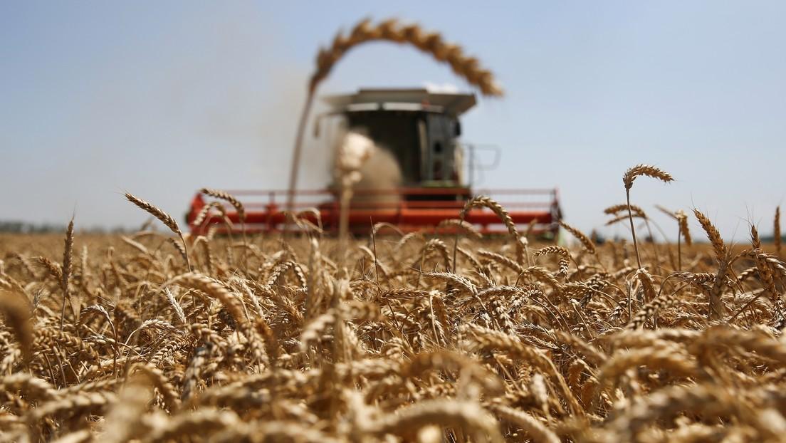 "Putin: ""Rusia se ha convertido en el primer exportador de trigo a nivel mundial"""
