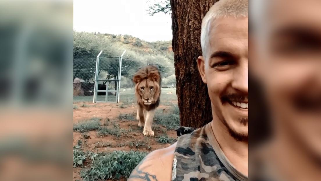 """VIDEO: Capta cómo un león se le acerca """"como cuando está a punto de matarte"""" mientras hace un selfi, pero el depredador hace lo más inesperado"""