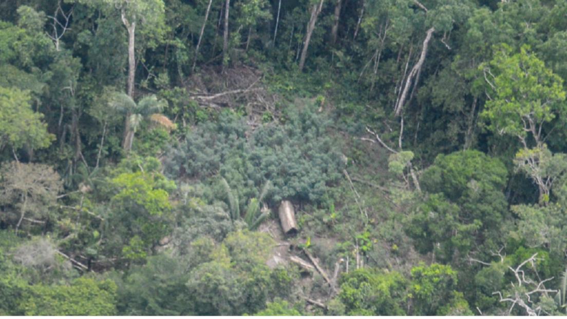 Imágenes inéditas de una comunidad de indígenas no contactados en la Amazonía peruana
