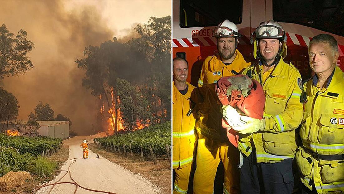 FOTOS: Bomberos australianos se ganan el aplauso de las redes con sus rescates de koalas de los incendios fortestales