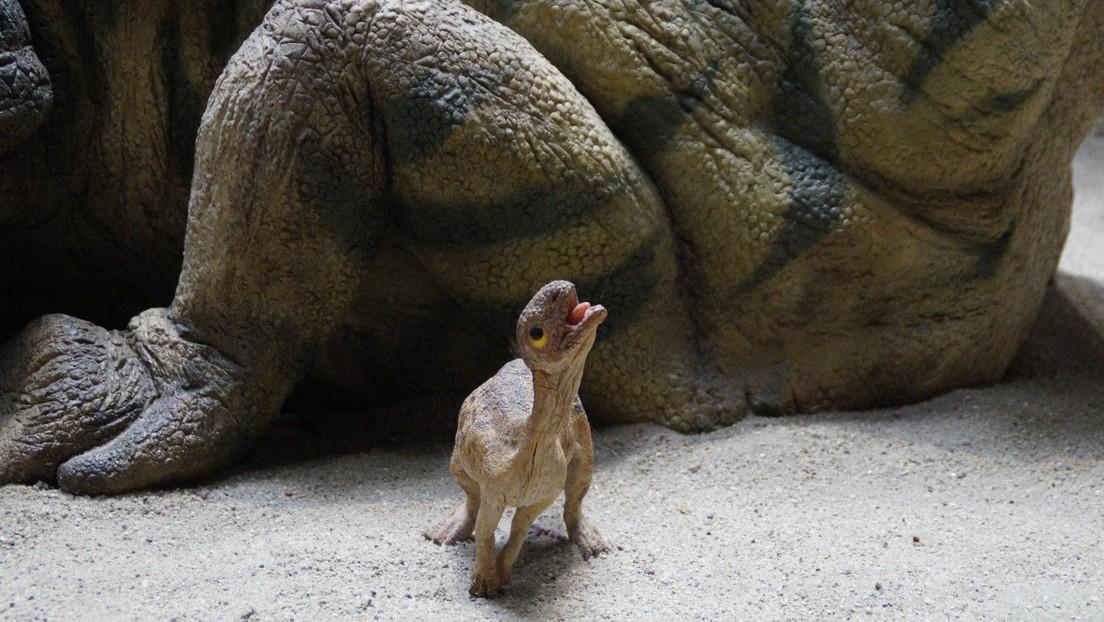 Este lagarto de 300 millones de años podría ser el primer ejemplo conocido de cuidado parental entre animales