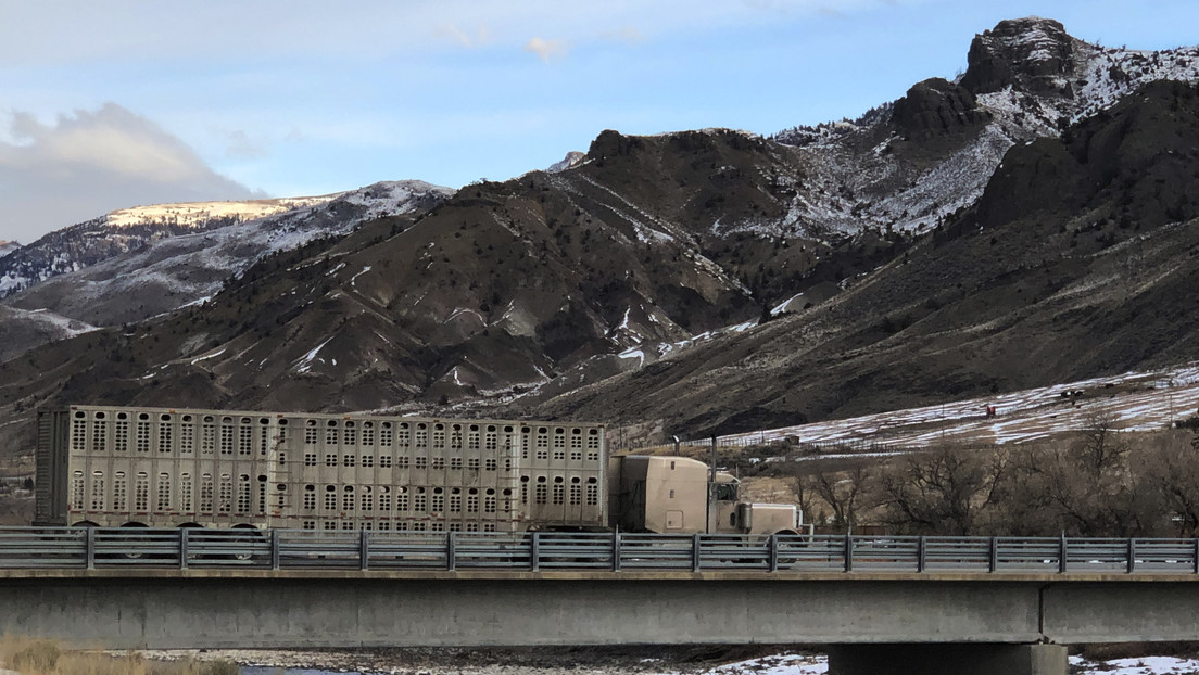El géiser activo más alto del mundo bate récord de erupciones en Yellowstone
