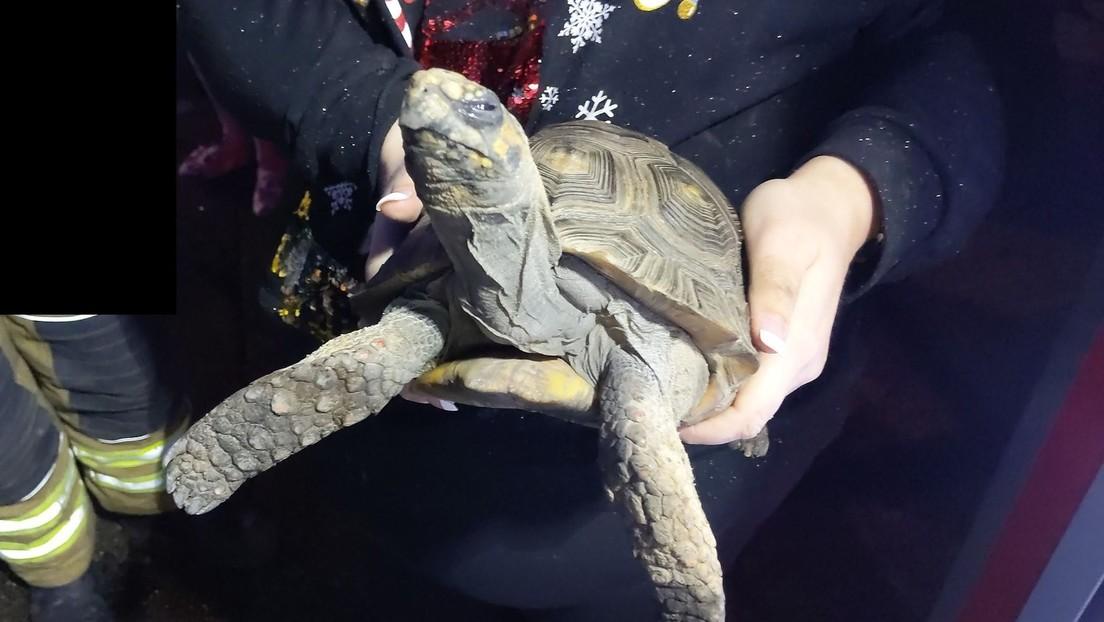 Salvan a tortuga que provocó un incendio en la vivienda de sus dueños