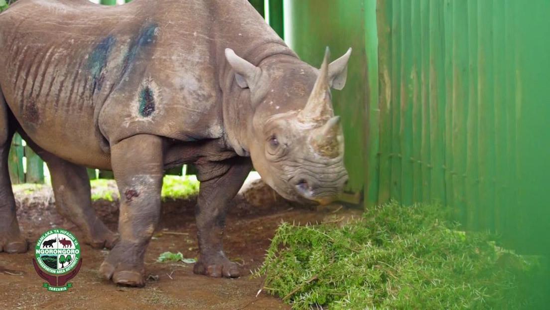 Muere a los 57 años el rinoceronte más viejo del mundo