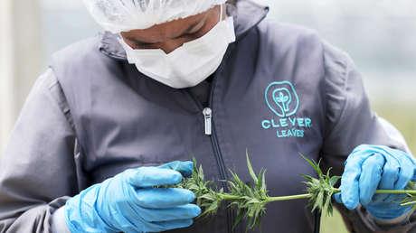 spacex-enviará-a-la-estación-espacial-internacional-cultivos-de-cannabis-y-café-en-2020