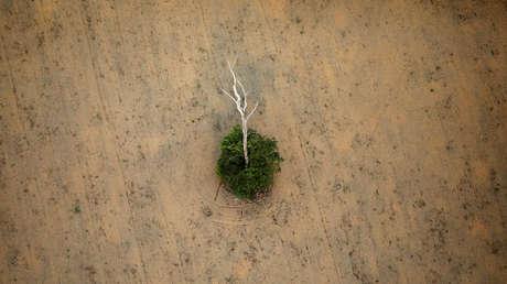 """Alertan de que la Amazonía está en un """"punto de inflexión"""" y puede convertirse en una sabana"""