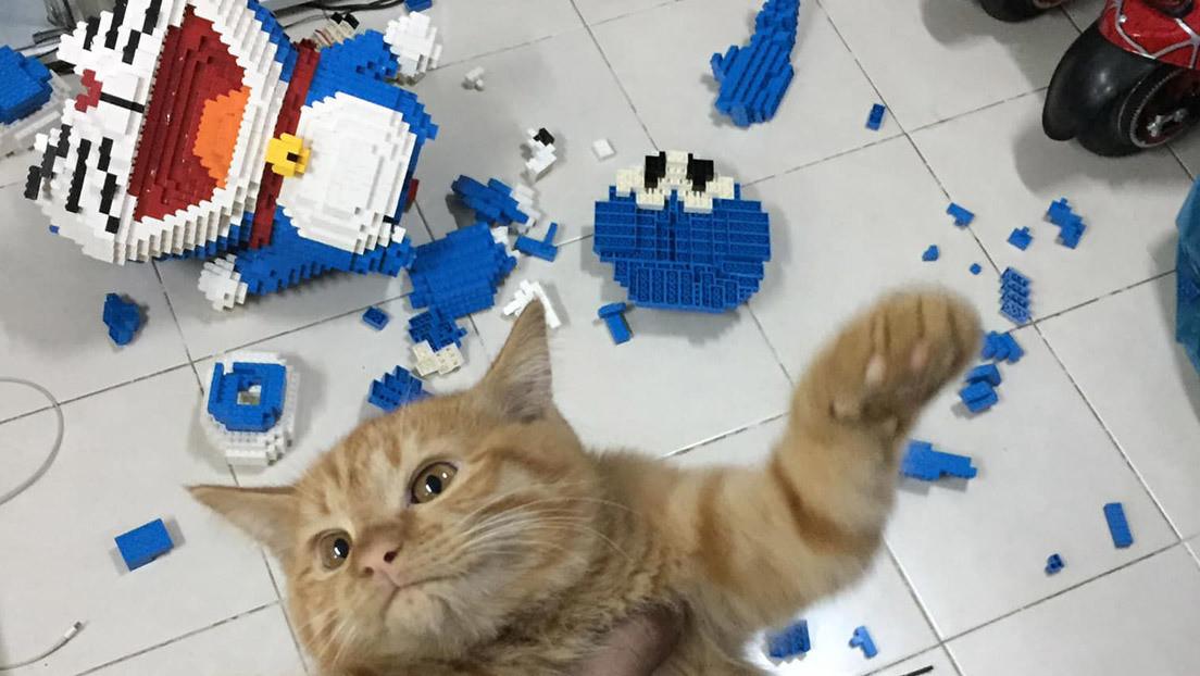 FOTOS: Construye una escultura de más de 2.400 piezas y su gato la destruye sin remordimientos
