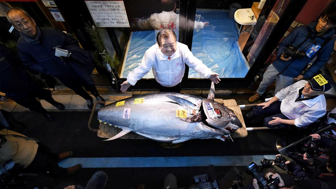 El 'rey del atún' gana una subasta al pagar 1,8 millones de dólares por un ejemplar (VIDEO)