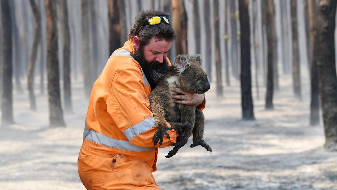 Más de mil millones de animales pierden la vida en los incendios de Australia