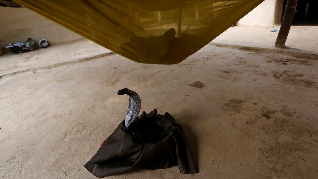 Graba a una cobra vomitando una botella de plástico y reabre el debate sobre la contaminación en la India (VIDEO)