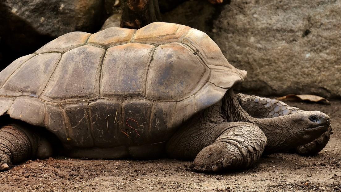 La tortuga que salvó a su especie de la extinción regresa a su hábitat en las islas Galápagos