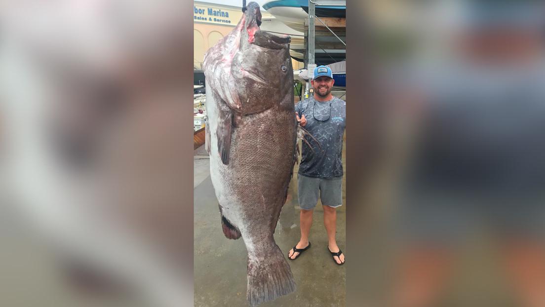 FOTOS: Atrapa un enorme pez de casi 160 kilos en Florida y resulta ser de una especie casi amenazada que sorprende con su edad